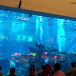Aquarium-im-Dubai-Mall