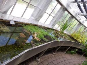 Wasserkanal Botanischer Garten