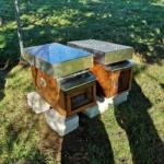 Imker in Ausbildung – Bienenhaus aufstellen März 2019